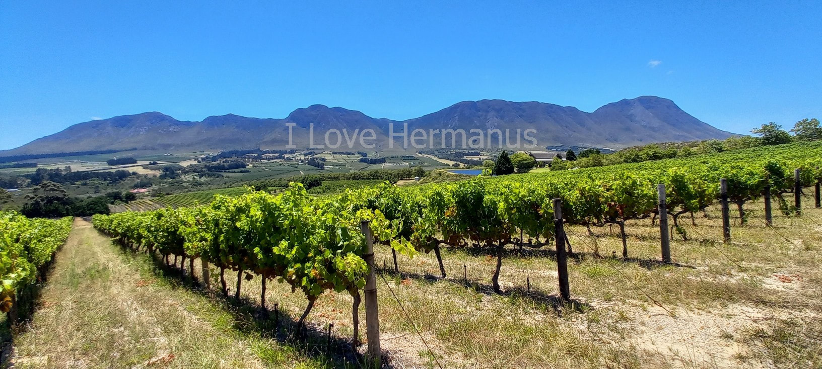 Hermanus award winning wine valley, Hemel-en-Aarde - producing over 120 great wines at over 22 independent wineries, near Cape Town, South Africa