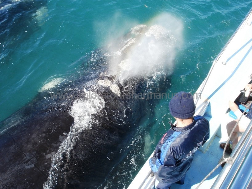 Whale watching boat trips Hermanus South Africa